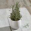 Chartwell Herb Pot