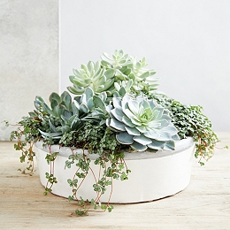 Earthenware Large Planter