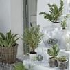 Kubu Extra Large Planter
