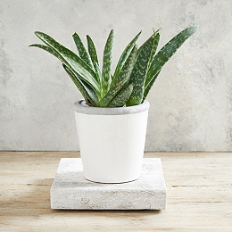 Earthenware Medium Planter