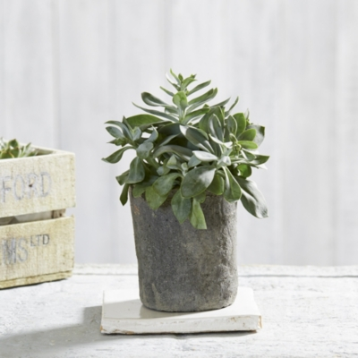 Large Mossed Plant Pot