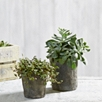 Medium Mossed Plant Pot