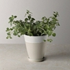 Ceramic Planter - Small