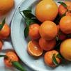 Orange Grove Diffuser