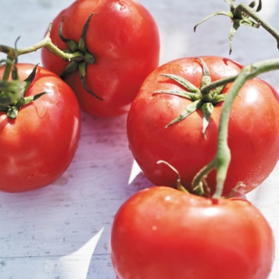 Vine Tomato Collection