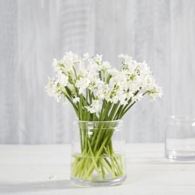 Danvers Vase Large