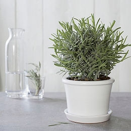 Roma Planter With Saucer