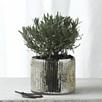 Mercury Vase - Small