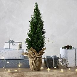 Mini Conifer Tree – 1.35ft