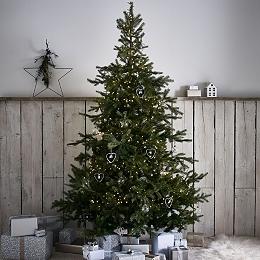 Spruce Christmas Tree - 7.5ft