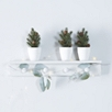 Mini Potted Fir Trees Set of 3