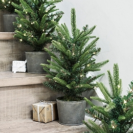 1ft Potted Spruce Christmas Tree (Pre Lit)