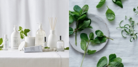 Wild Mint Collection
