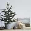 Fir Tree Large Candle